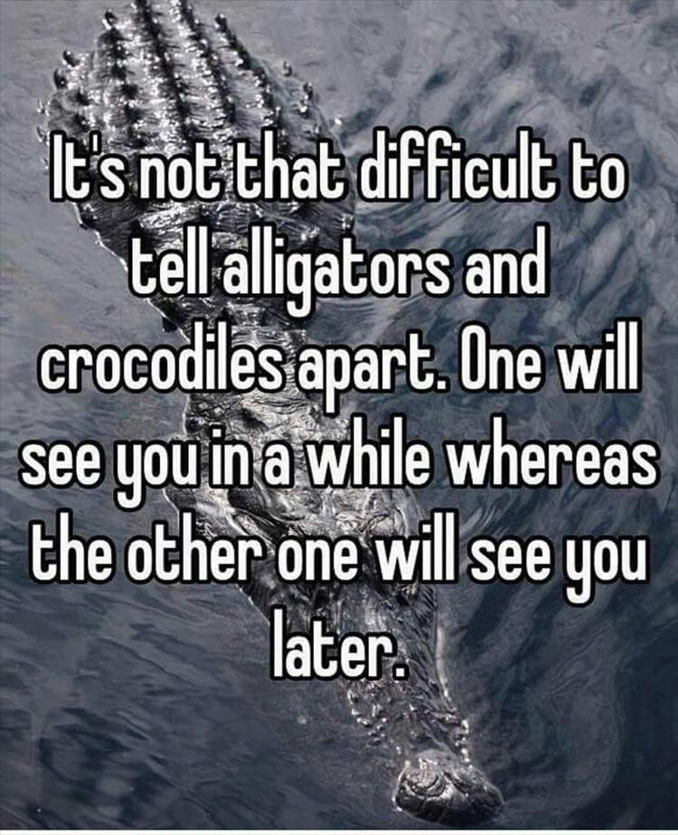 It's not that difficult to tell alligators and crocodiles apart.