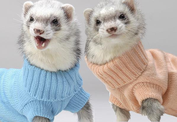 Just a couple of ferrets in pastel colored turtlenecks