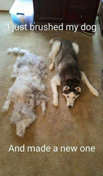 Just brushed my dog, and made a new one.
