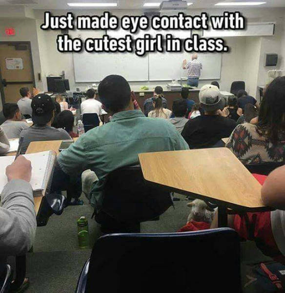 Just made eye contact with the cutest girl in class.