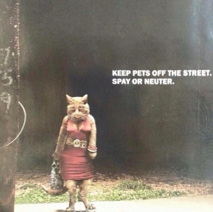 Keep pets off the street. Spay or neuter.