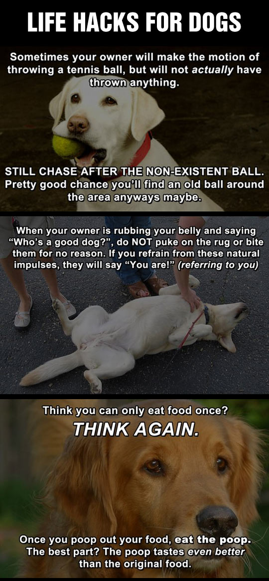 Life hacks for dogs.