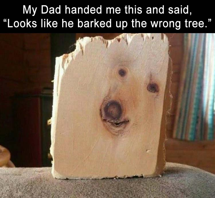 Looks like he barked up the wrong tree.