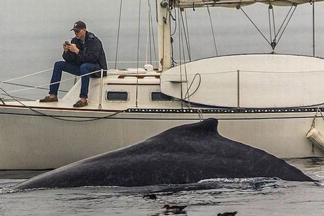 Man fixated on his cell phone misses an awesome close up whale encounter.