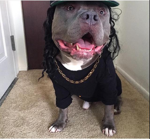 My dog after watching Straight Outta Compton.