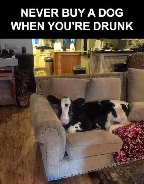 Never buy a dog when you're drunk.