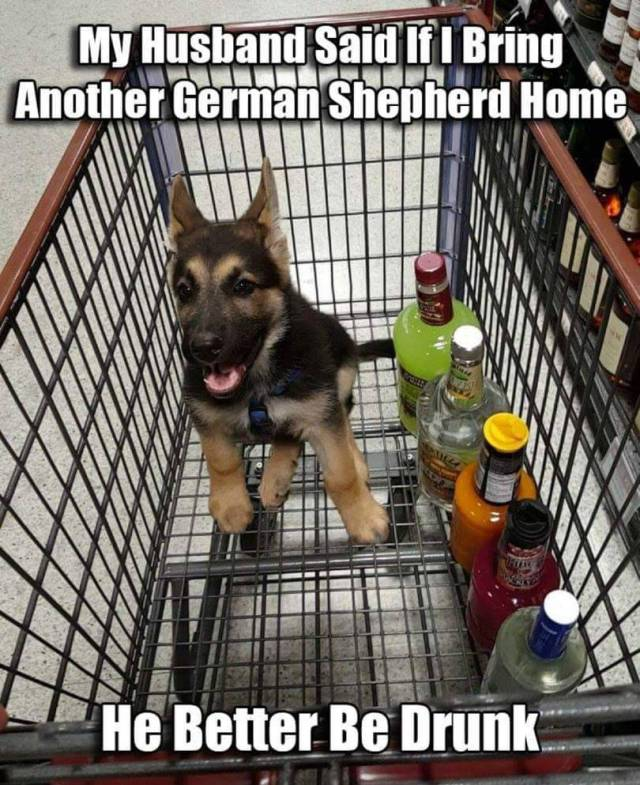 New German Shepherd puppy requires booze.