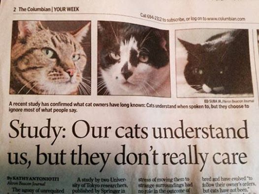 New Study Shows Your Cat Understands You But Doesn't Care. Meowch!