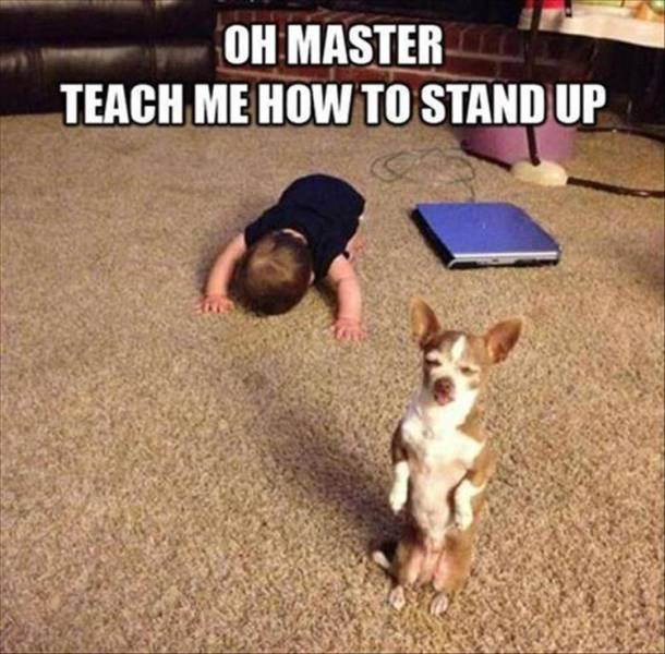 Oh Master. Teach me how to stand up!