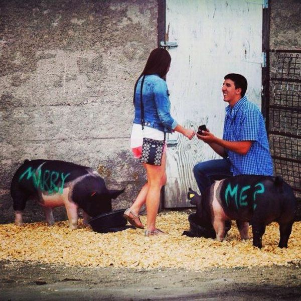 Romantic Wedding Proposals Don't Usually Involve Pigs