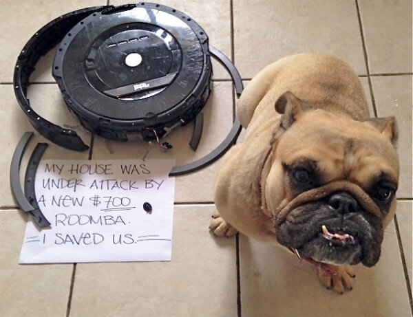 Roomba vs Dog