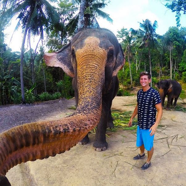 Selfie sticks are outdated fads. The new rage is elephant selfies.