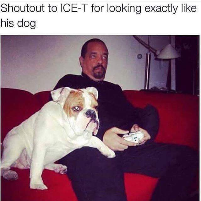 Shoutout to Ice-T for looking exactly like his dog.