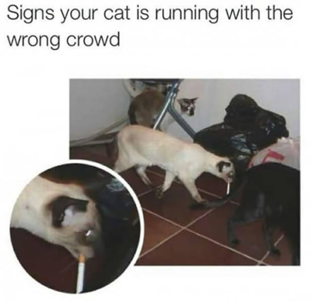 Signs your cat is running with the wrong crowd.