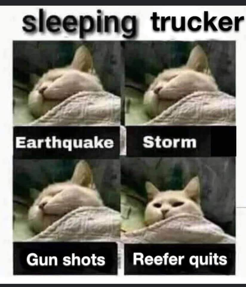 Sleeping trucker.