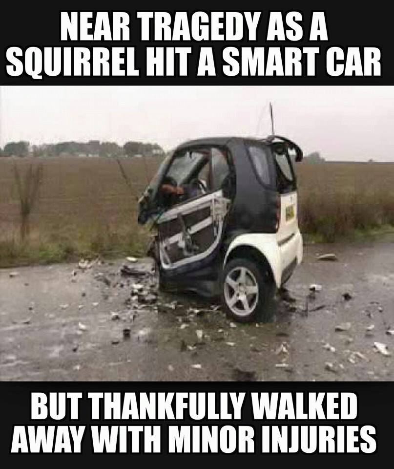 Smart car accidentally hits a squirrel, but don't worry, the squirrel is just fine.