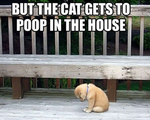 Some things in life are so not fair especially when the cat gets to poop in the house.
