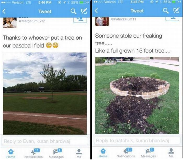 Someone planted a tree in the middle of a baseball field.