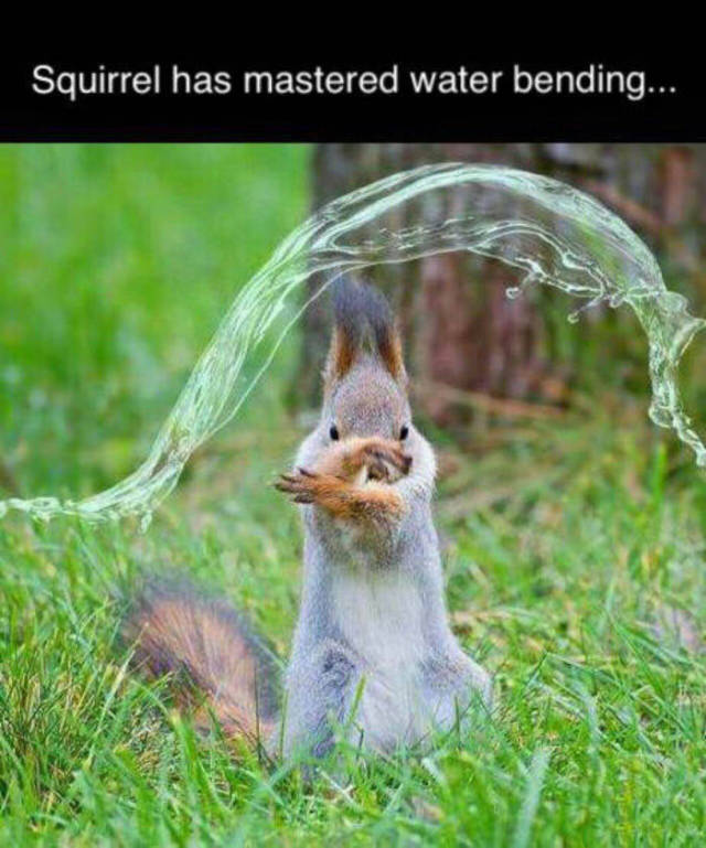 Squirrel has mastered water bending.