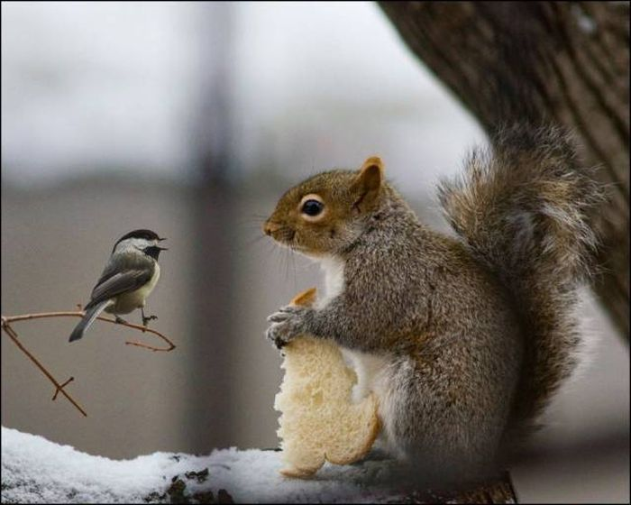 Squirrel is not interested in sharing his bread.