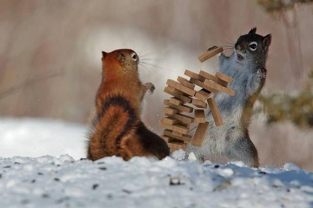 Squirrel Jenga.