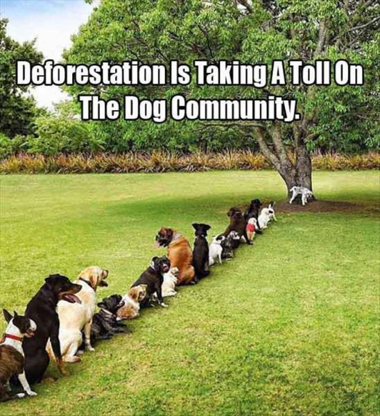 Stop deforestation now! Do it for the dogs!