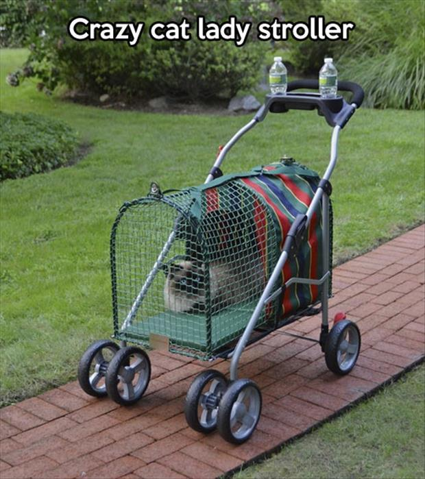 Stroller for pet owners who treat their cats like their children or it would also be good if you are a crazy cat lady.