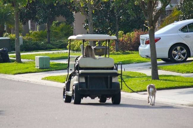 Taking your dog for a walk in a golf cart. Lazy ass.