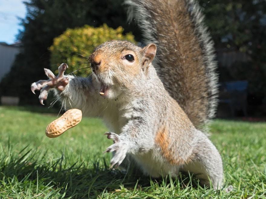 Playing catch with a squirrel.