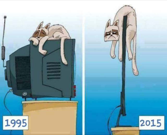 Technology has caused cats to suffer terrible consequences.