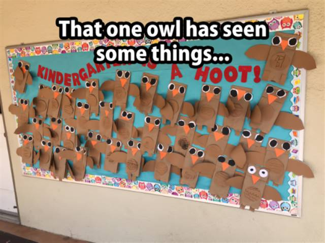 That one owl has seen some things.