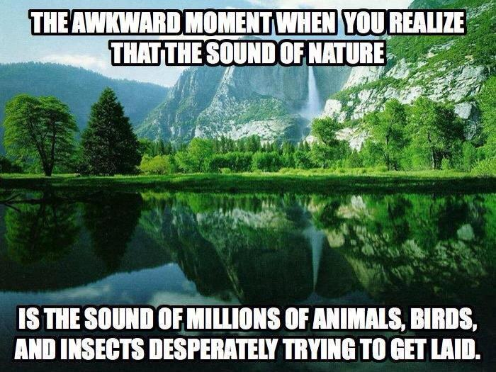 The awkward moment when you realize what the sound of nature actually is.