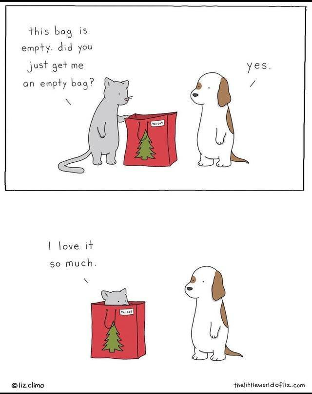 The best gift you can give a cat.