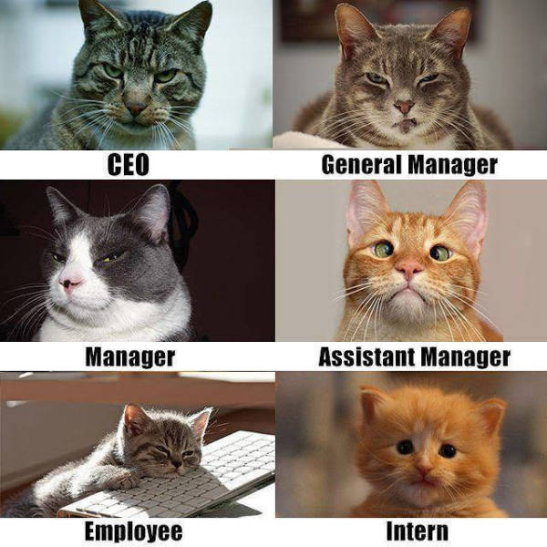 The corporate ladder demonstrated by cats.