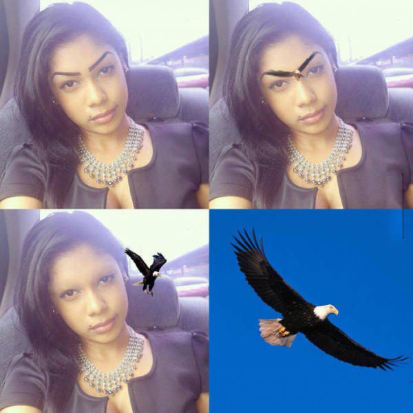 Bald eagle eyebrows.