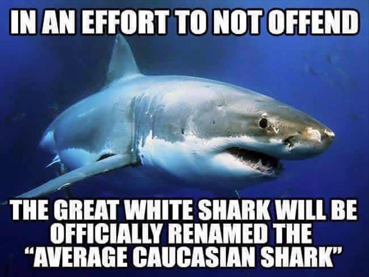 The great white shark will officially be renamed in an effort not to offend anyone.