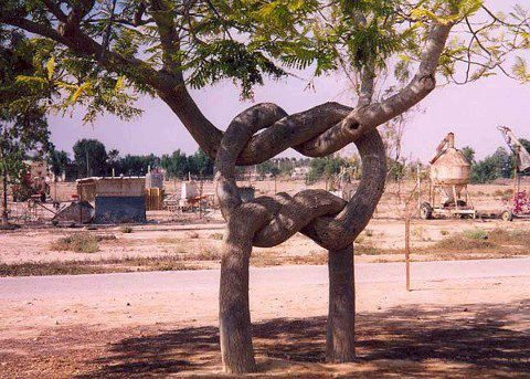 The infamous pretzel tree