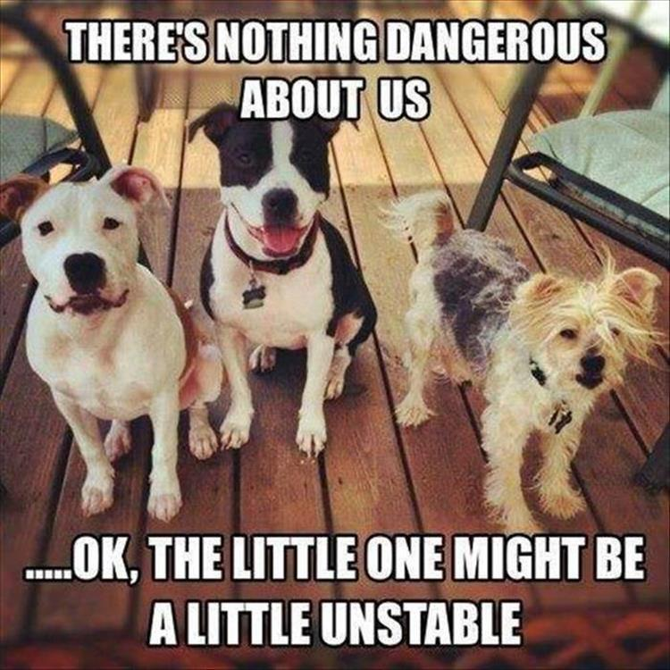 There's nothing dangerous about these dogs. Except maybe the little one.