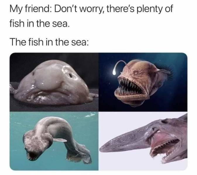 There's plenty of fish in the sea.