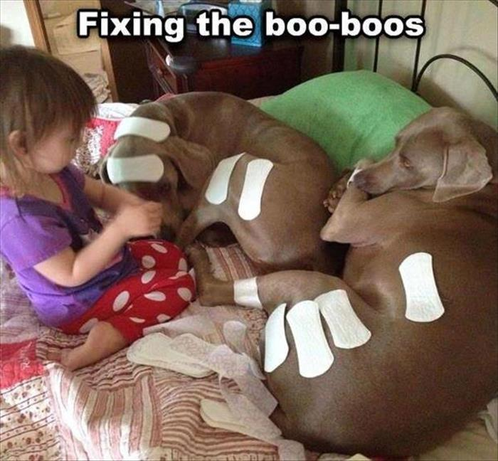 This caring child is fixing her doggies boo-boos.