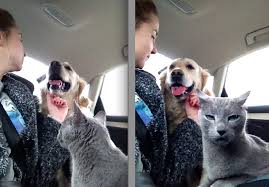 This Cat Is Not Very Happy The Dog Is Getting All The Attention