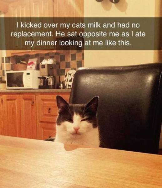 This cat isn't crying over spilled milk, but he looks really pissed.
