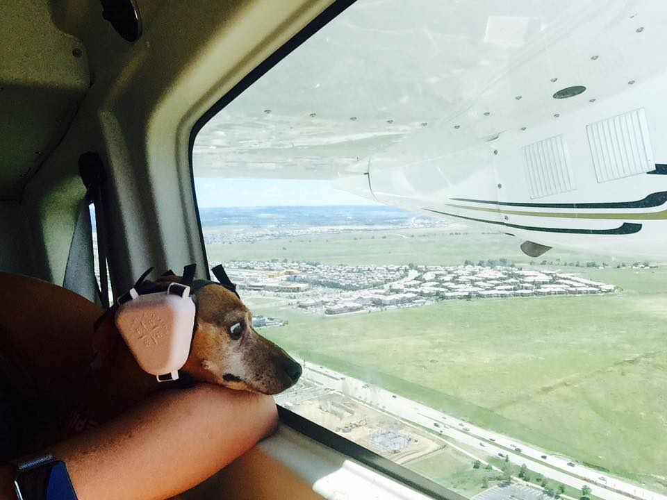 This dog just found out he has a fear of flying.