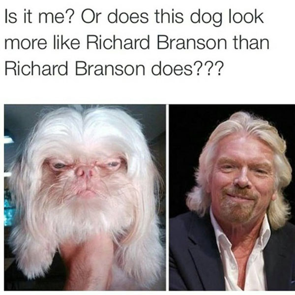 This dog looks a lot like Richard Branson.