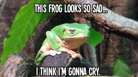 This frog looks so sad, I think I'm gonna cry.