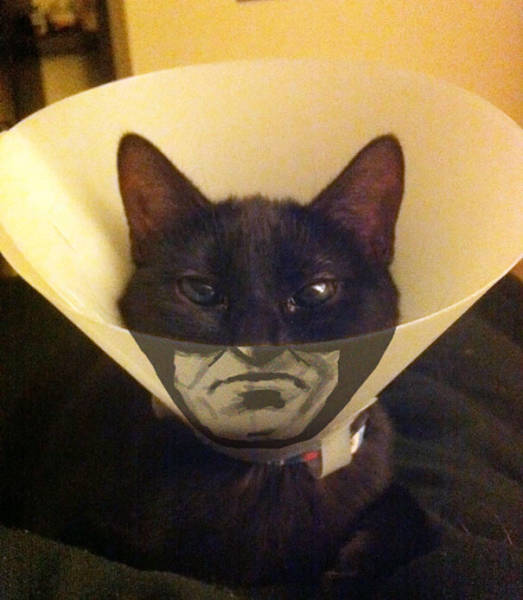 This is how you make the best out of your conehead pets situation.