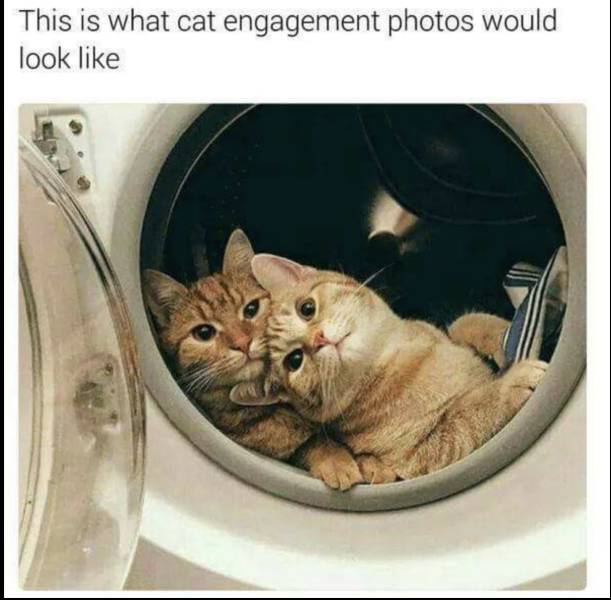 This is what cat engagement photos would look like.