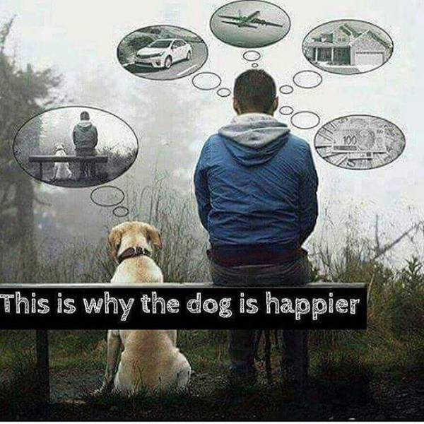 This is why the dog is happier.