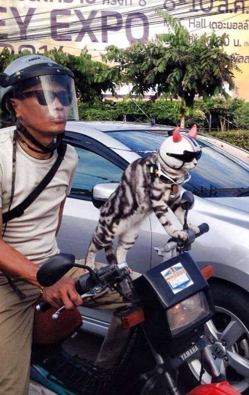 This Man And His Cat Love To Go For Rides on His Scooter.