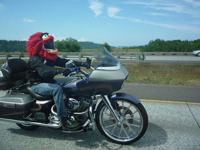 Motorcycle helmet that looks like Animal from The Muppets is sure to turn some heads on the highway.